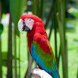 Macaw parrot sitting on branch — Foto Stock