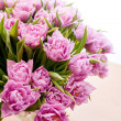 Pink peonies — Stock Photo #22050357