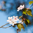 Blooming  trees — Stock Photo