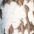 Tree bark texture — Stock Photo #25237331