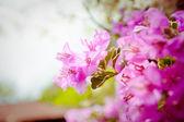 Asian flowers — Stock Photo