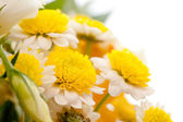 Chamomile flower isolated on white — Stock Photo