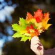 Woman holding maple leaves — Stock Photo