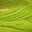 Rice Fields, Bali, Indonesia — 图库照片