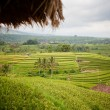 Rice Fields, Bali, Indonesia — ストック写真