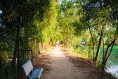 公园里的树木的大道 — 图库照片