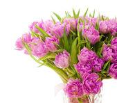 Schöne lila Tulpen — Stockfoto