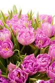 Beautiful purple tulips — Stock Photo