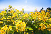 Blooming yellow  flowers — Stock Photo