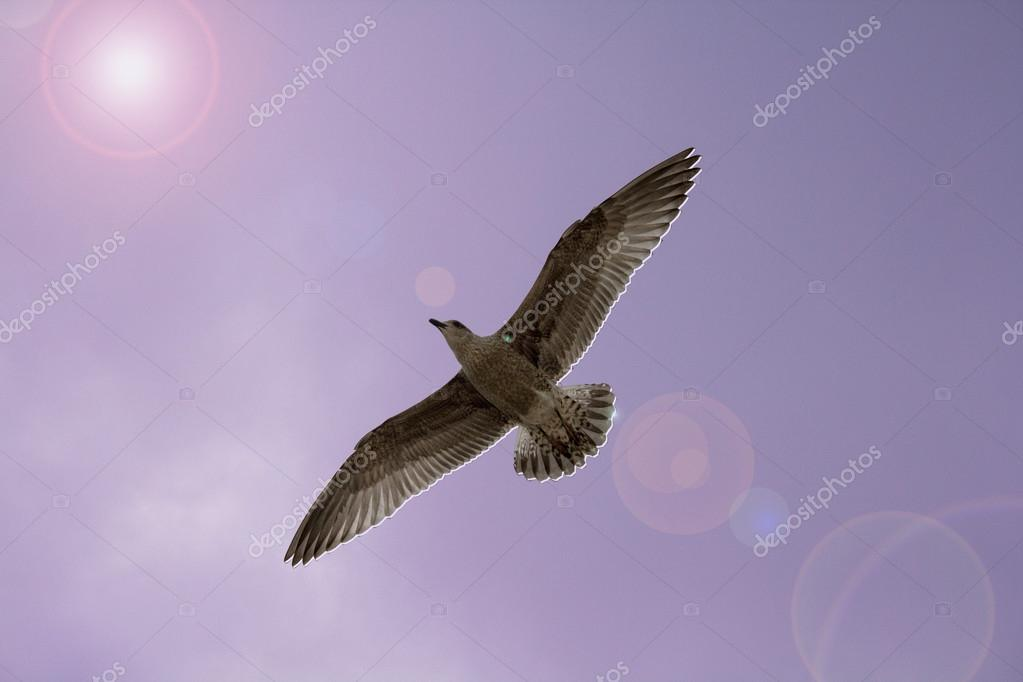 Seagull  in the Autumn's blue sky — Stock Photo #12784393