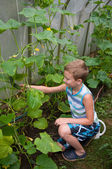 Young boy in hothouse — Stock Photo
