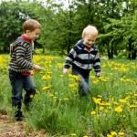 Two boys running in dandelion meadow — Stock Photo #12867441