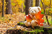 Teddy bear in autumn park — Stock Photo