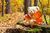 Teddy bear in autumn park — Stock Photo