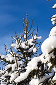 Christmas-tree in snow — Stock Photo