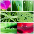 Royalty-Free Stock Photo: Water drops collage