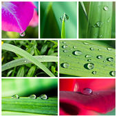 Water drops collage — Stock Photo