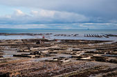Oyster beds in Cancale, France. — Stock Photo