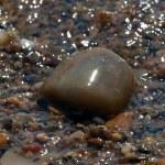 Mediterranean beach stones, Greece — Stock Photo #12853492