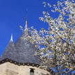Cherry blossoms and Castle, Carcassonne, France — Stock Photo #12853542