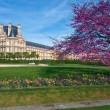 Louvre museum and Jardin des Tuileries (The Tuileries Garden), P — Stock Photo