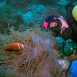 Maldive anemonefish (Amphiprion nigripes) in a sea anemone (Heteractis magnifica) and diver, Maldives — Stock Photo #12854151