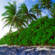 Coastline of island with some palm trees — Stock Photo