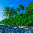Coastline of island with some palm trees — Stock Photo #12854444