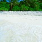 Coastline of island with some palm trees — Stock Photo #12854450