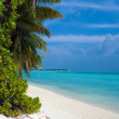 Coastline of island with some palm trees, Maldives — Stock Photo #12854462