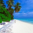 Coastline of island with some palm trees — Stock Photo #12854463