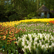 Tulips in Keukenhof flower garden in Lisse, Netherlands — Stock Photo