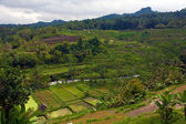 Rice terrace fields, Bali, Indonesia — Foto Stock