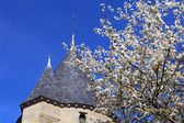 Cherry blossoms and Castle, Carcassonne, France — Stock Photo