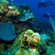 Colorfull reef and group of divers, Cayo Largo, Cuba — Stock Photo #12883170