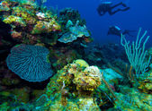 Colorfull reef and group of divers, Cayo Largo, Cuba — Stock Photo