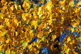 Autumn gold leaves background — Stock Photo