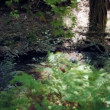 Forest spring in Trodos mountains, Cyprus — Stock Video