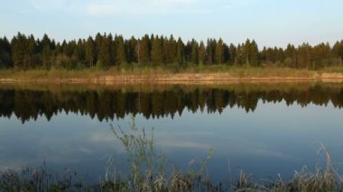Mirror of calm water and pine-tree forest, Yaroslavl region, Russia — Stock Video