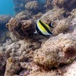 Yellow Fish in Tropical Coral Reef, Maldives - Stock Photo