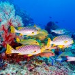 tropical fishes near colorful coral reef — Stock Photo