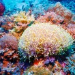 Colorful Tropical Reef Landscape — Stock Photo