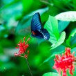 Closeup of Beautiful Butterfly on Flower - Stock Photo