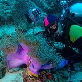 Big Purple Anemone and Scuba Diver — Stock Photo