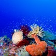 Sea Lilies on Colorful Tropical Reef — Stock Photo