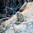 Cute Monkey on Rock, Komodo Island - Photo