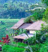 Pueblo tradicional con campo de arroz en selva — Foto de Stock
