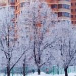 Snowy Winter Landscape — Stock Photo #35622389