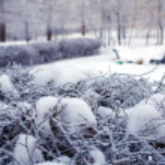 Snowy Winter Landscape — Stock Photo