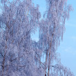 Frozen Tree — Stock Photo #35622411